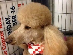 grooming dog-13