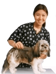 dog grooming courses,