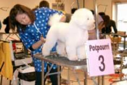 dog grooming contest