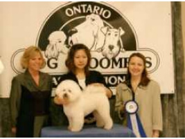 dog grooming constest photo23