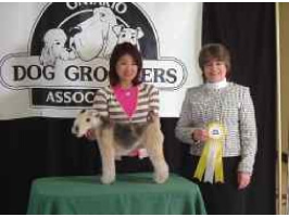dog grooming competition-23