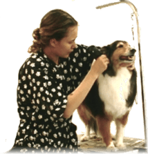 dog grooming course -student